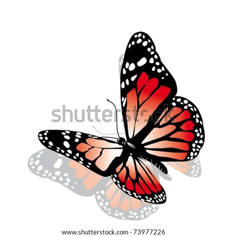 vector pink butterfly