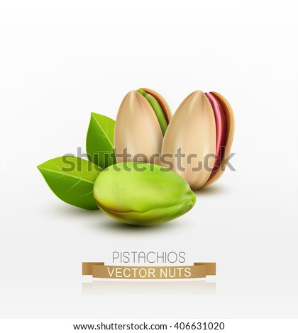 Vector pistachios peeled or in shell isolated on white background - stock vector