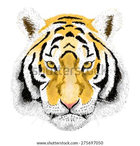 Vector Portrait of a Tiger. Beautiful face big cat. - stock vector