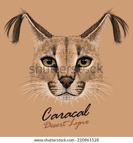 Vector portrait of wild cat.Caracal. - stock vector