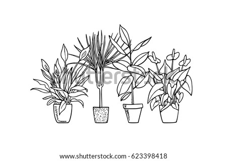 house plants drawing. vector print with hand drawn houseplants flamingo lily dracena peace rubber house plants drawing