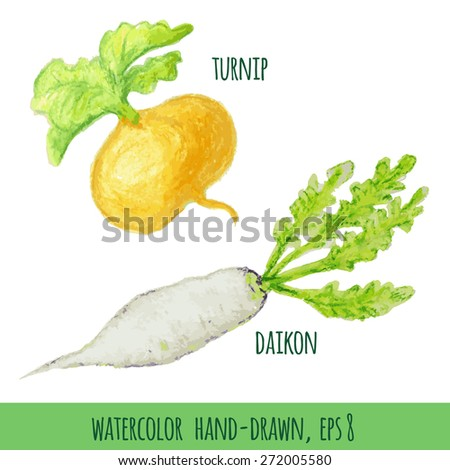 vector radish and turnips watercolor painted by hand - stock vector