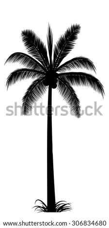 vector realistic palm tree silhouette in black - stock vector