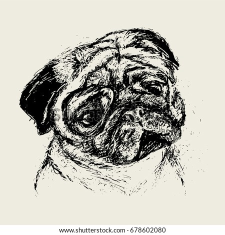 vector realistic pug drawing hand drawn rough ink pen sketch style