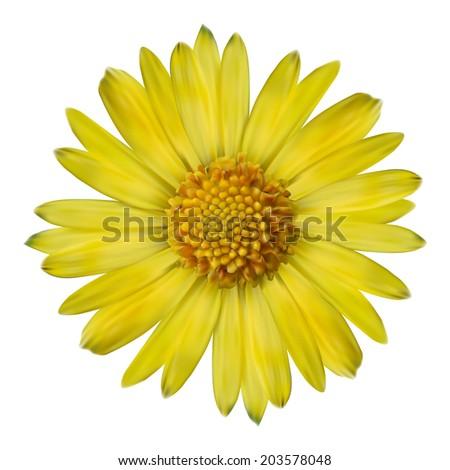 Vector realistic yellow flower. - stock vector