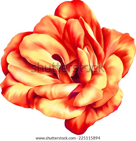 Vector Red and orange rose flower isolated on white background - stock vector