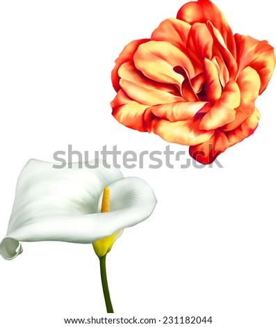 Vector Red and orange rose flower, white calla lily isolated on white background - stock vector