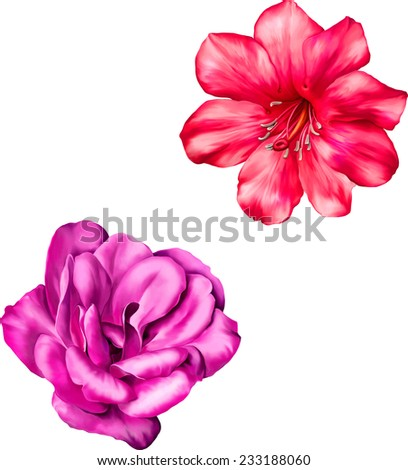 Vector Red and pink rose flower, camelia isolated on white background - stock vector