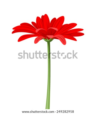 Vector red gerbera flower with stem isolated on a white background. - stock vector