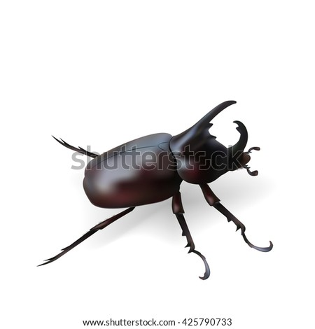 Vector rhinoceros beetle. Depicted in a realistic style.
