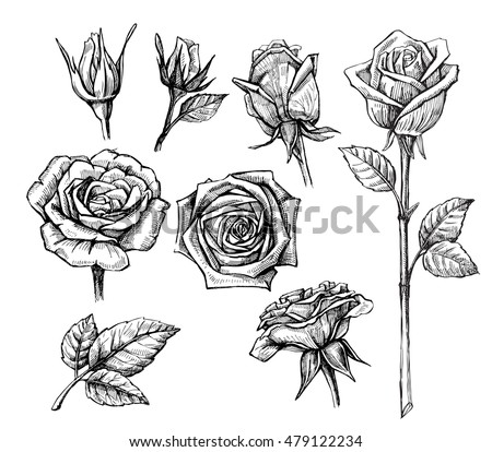 Rose Sketch Stock Images Royalty Free Images Amp Vectors