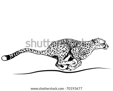 Vector running cheetah. - stock vector