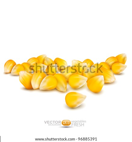 Vector scattered grains of corn on a white background