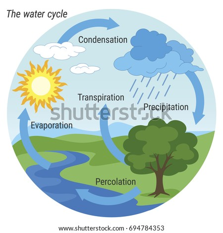 Vector schematic representation water cycle nature stock vector vector schematic representation of the water cycle in nature illustration of diagram water cycle ccuart Image collections