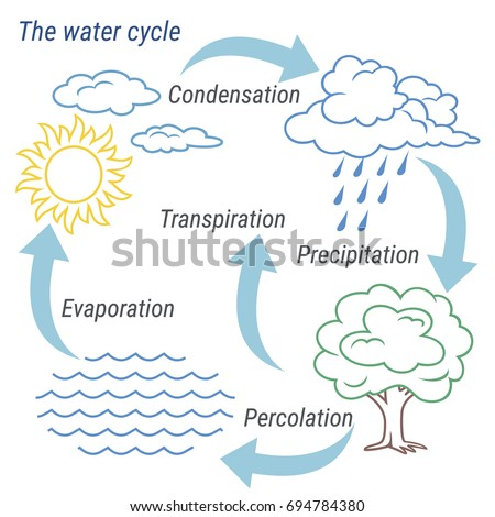 Vector schematic representation water cycle nature stock vector vector schematic representation of the water cycle in nature illustration of diagram water cycle ccuart Gallery
