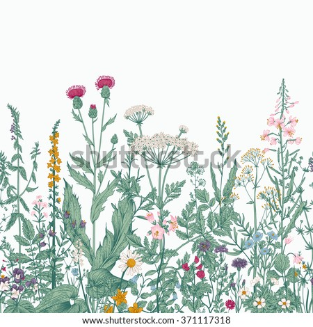 Vector seamless floral border. Herbs and wild flowers. Botanical Illustration engraving style. Colorful - stock vector