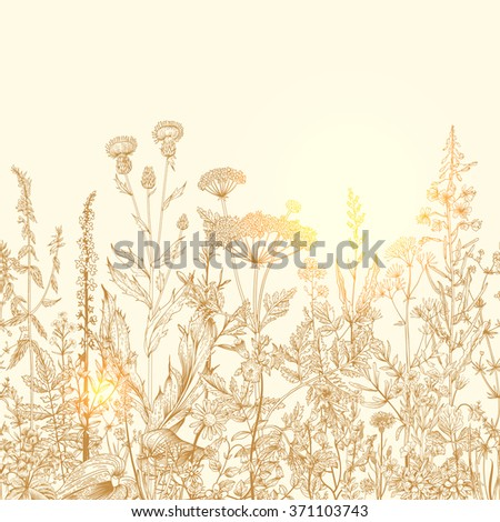 Vector seamless floral border. Herbs and wild flowers. Botanical Illustration engraving style. Retro