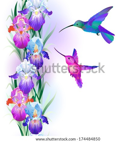 Vector seamless pattern with bright multicolored Iris flowers and hummingbirds - stock vector