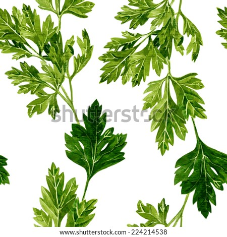 vector seamless pattern with leaves of parsley drawing by watercolor on white background, hand drawn vector illustration - stock vector