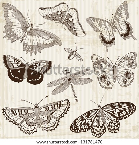 Vector Set: Calligraphic Butterfly Design Elements and Page Decoration - stock vector
