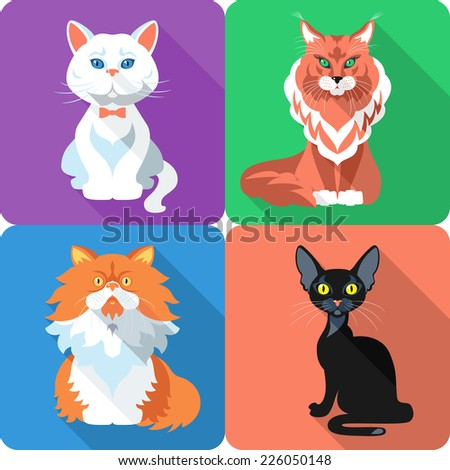Vector Set icon flat design british and persian cat, bombay cat and maine coon - stock vector