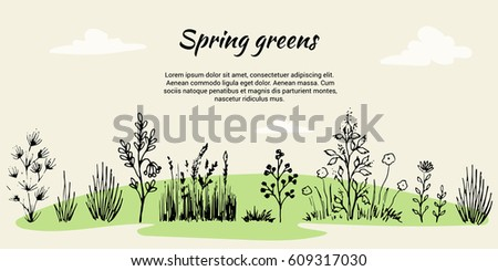 Vector set in the form of a banner on a theme of field grasses, flowers and plants. Spring Green. It is executed in the form of a sketch. All objects are isolated
