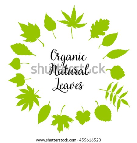 Vector set leaves. Natural green leafs set. Leafs set element floral color garden art. Collection green tree leaves illustration. - stock vector