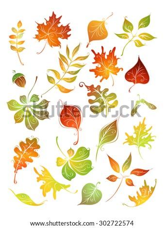 Vector set of autumn leaves. Birch, elm, oak, rowan, maple, chestnut, acorn, aspen isolated on white background. - stock vector