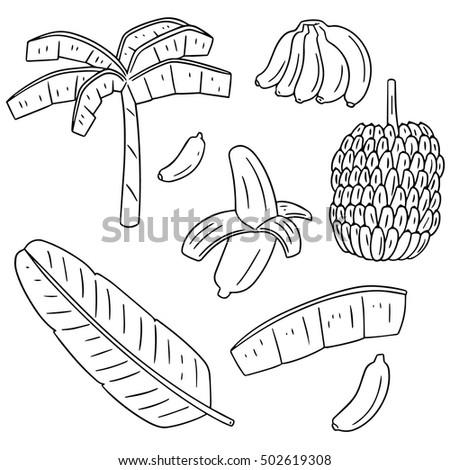 Banana Tree Vector Stock Images Royalty Free Images Vectors