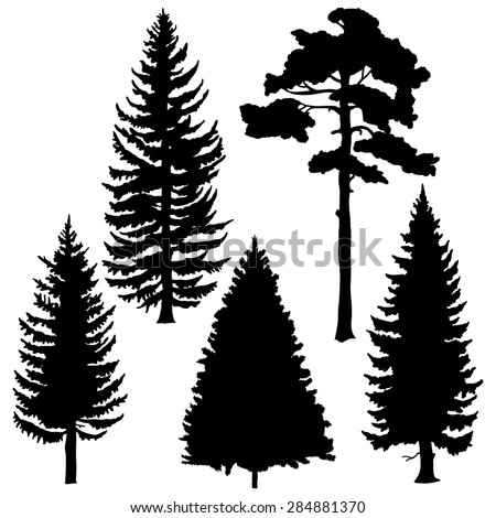 Vector Set of Black Coniferous Trees Silhouettes - stock vector