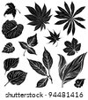 Vector set of black floral design elements - leafs - stock photo