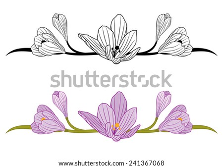 vector set of borders with flowers of crocus - stock vector