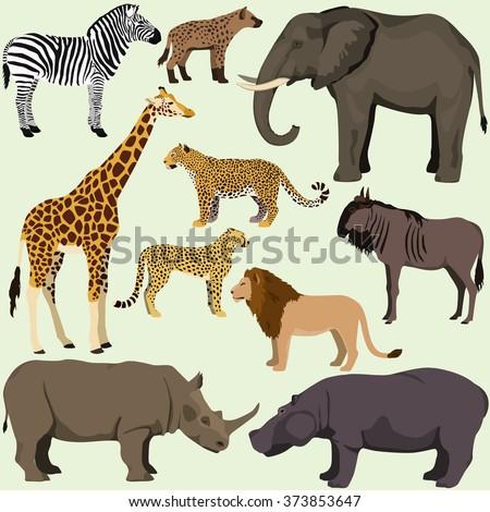 Okapi And Giraffe Together