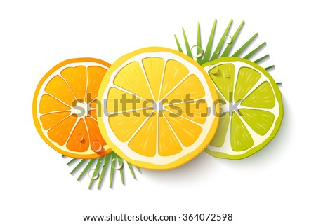 Vector set of citrus fruits. Isolated fruit slices on the white background. Realistic 3D orange, lemon, lime, drops of juice and palm leaves. - stock vector