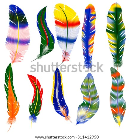 Vector set of colorful bird feathers - stock vector