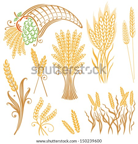 Vector Set of colorful grain, corn - stock vector