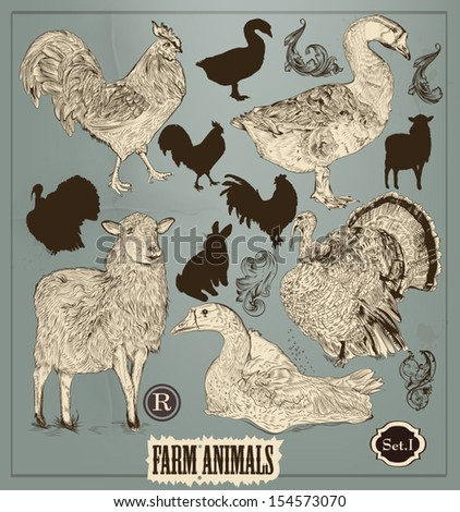 Vector set of detailed farm animals in vintage style for design  - stock vector