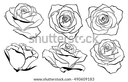 Vector set of detailed isolated outline rose bud sketches in black color vector illustration
