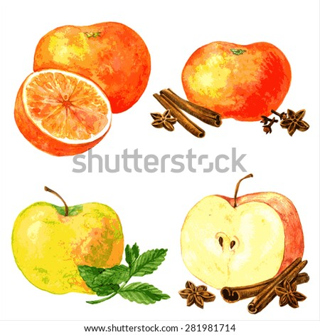vector set of different fruits and spices, four food composition painting by watercolor, apples and oranges and cinnamon sticks, anise seeds and mint leaves, drawing by aquarelle at white background - stock vector