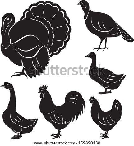 vector set of different monochromatic birds farm - stock vector