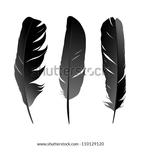 Vector set of feather on white background - stock vector
