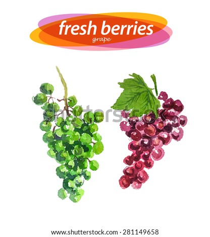 Vector set of grapes elements on white background. Cute illustration is good for magazine or book, poster and card design, menu cover. - stock vector
