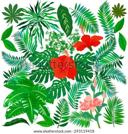 Vector set of graphic elements with leafs inspired by tropical nature, plants like palm trees, ferns in multiple green colors, hibiscus flowers and other flowers - stock vector