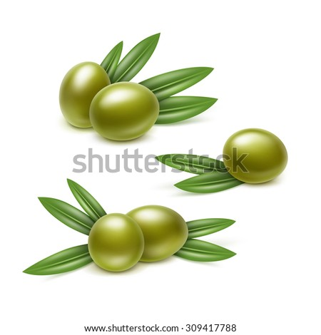 Vector Set of Green Olives Branches with Leaves Isolated on White Background