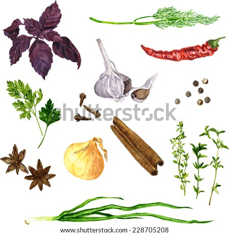 vector set of green stuff, spices and vegetables drawing by watercolor at white background, hand drawn vector illustration - stock vector