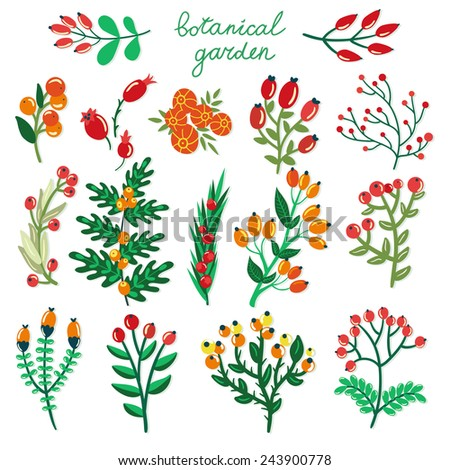 Vector set of hand drawing branches with berries. Beautiful floral elements for your design. Botanical garden collection. - stock vector