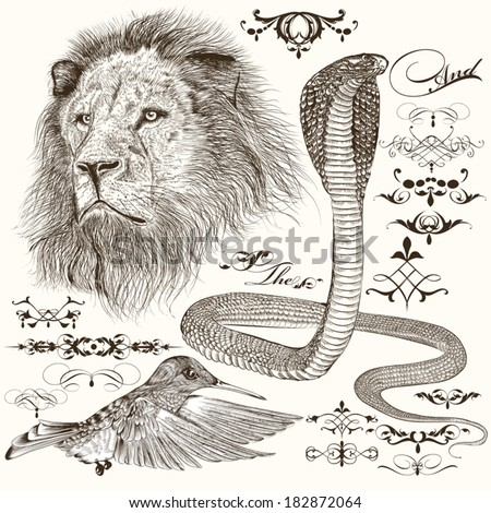 Vector set of hand drawn detailed animals with calligraphic elements - stock vector