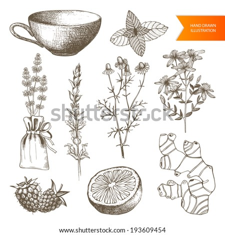 Vector set of hand drawn medical herbs and plants isolated on white. Tea elements collection - stock vector