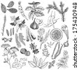Vector set of hand drawn spices and herb isolated on white background - stock vector