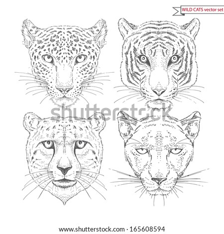 Vector Set of Hand Drawn Wild Cat Portraits isolated on white - stock vector